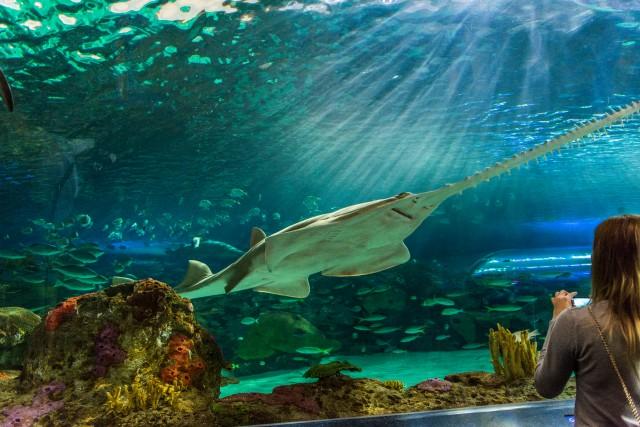 Tiburon sierra acuario Toronto