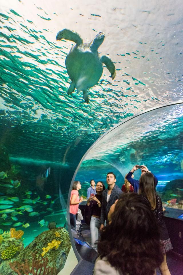 Tortuga marina acuario Toronto
